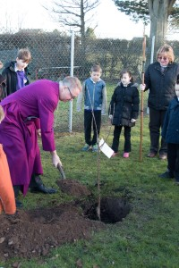 Tree planting at School